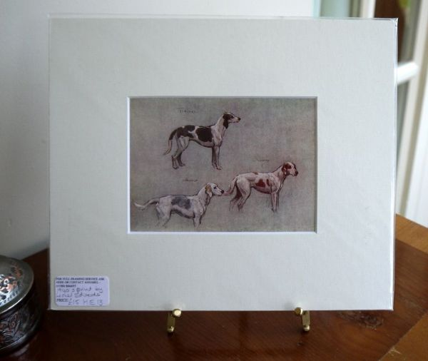 Coloured study of Hounds - H E13 -  Welsh Foxhounds  1940's print by Lionel Edwards
